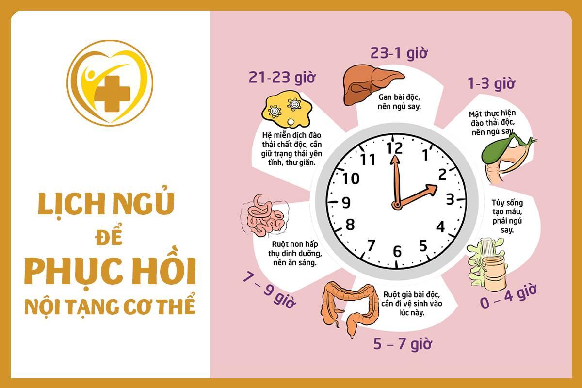 lịch ngủ hồi phục nội tạng