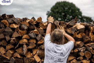 Thông tin chi tiết về các loại gỗ được sử dụng trong sản xuất nội thất