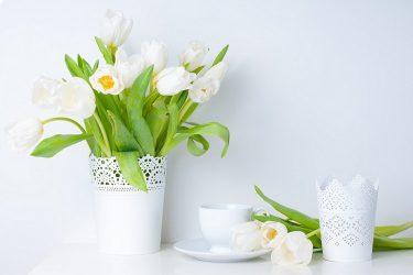 Các loài hoa phòng ngủ hợp ngũ hành để vợ chồng hạnh phúc viên mãn