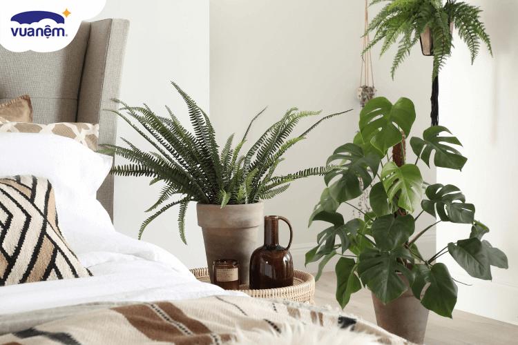 cây phong thuỷ phòng ngủ